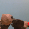 De klipska kråkorna